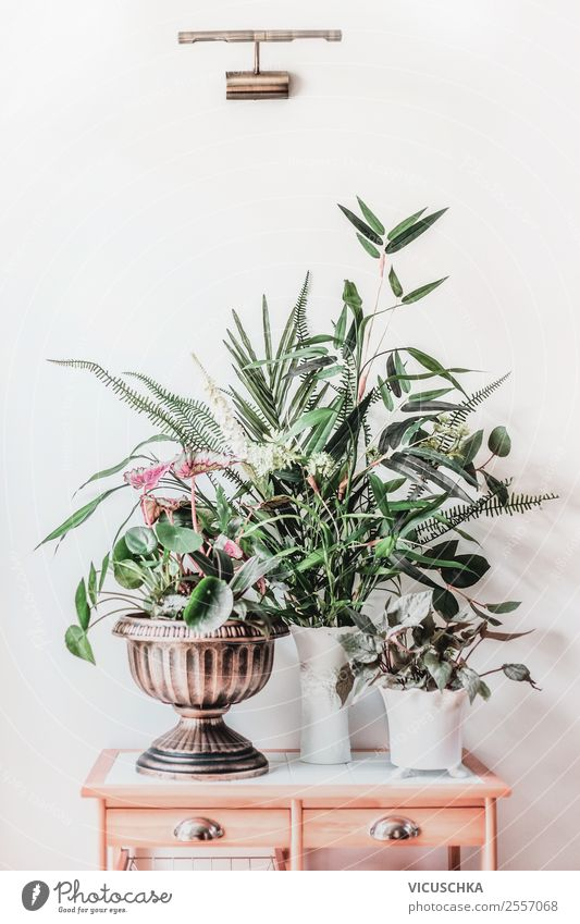 Nature Plant Background picture Interior design Wall (building) Style Garden Wall (barrier) Living or residing Design Flat (apartment) Decoration Modern Table