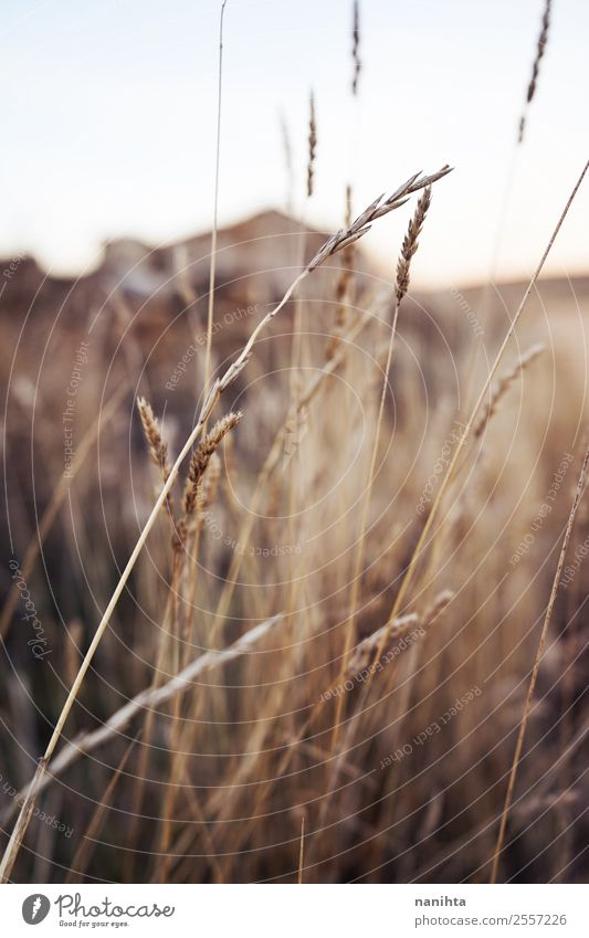Beautiful dried plants in autumn Environment Nature Plant Summer Autumn Beautiful weather Leaf Foliage plant Wild plant Field Esthetic Thin Authentic Simple