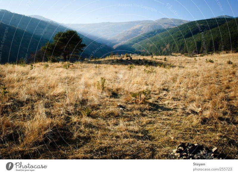 Vitosha Mountain landscape Sky Nature Blue White Green Tree Plant Leaf Black Forest Autumn Landscape Gray Grass Air