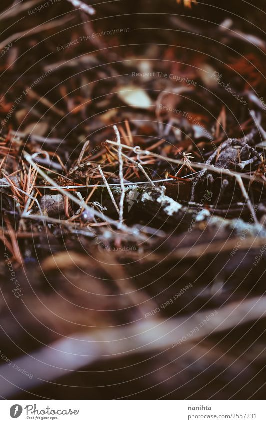 Abstract macro shot of the forest soil in autumn Environment Nature Plant Elements Earth Autumn Grass Moss Leaf Forest Wood Old Dark Authentic Small Natural Dry