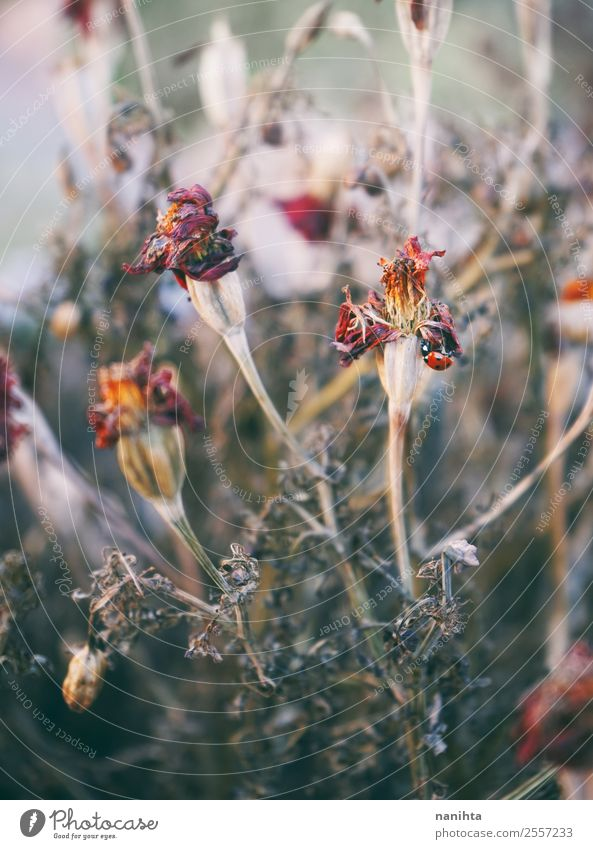 Beautiful dried flowers Nature Old Plant Flower Autumn Environment Blossom Sadness Natural Death Design Wild Gloomy Authentic Change Dry