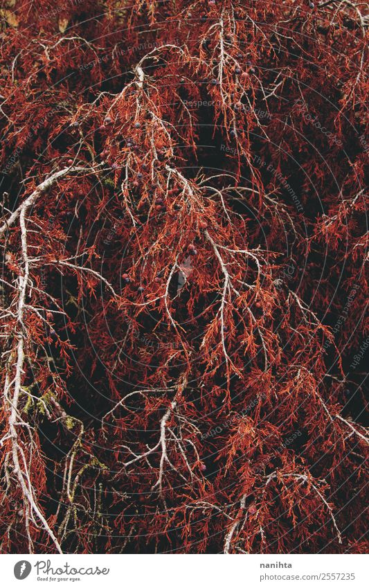 Red organic texture from an autumn tree Nature Tree Leaf Forest Dark Life Autumn Environment Wood Natural Brown Wild Esthetic Authentic Large