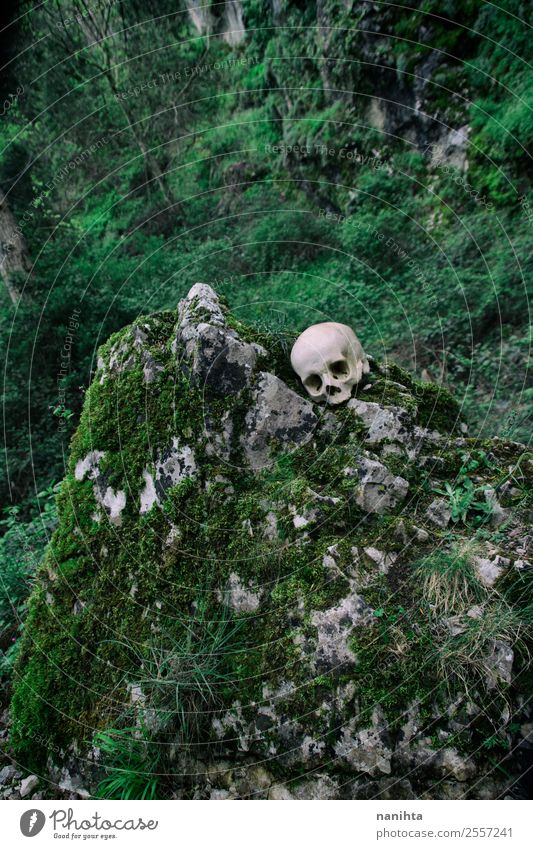 Lost skull in a wild mountain Nature Plant Green Landscape Tree Mountain Environment Spring Natural Death Rock Wild Authentic Crazy Broken Historic