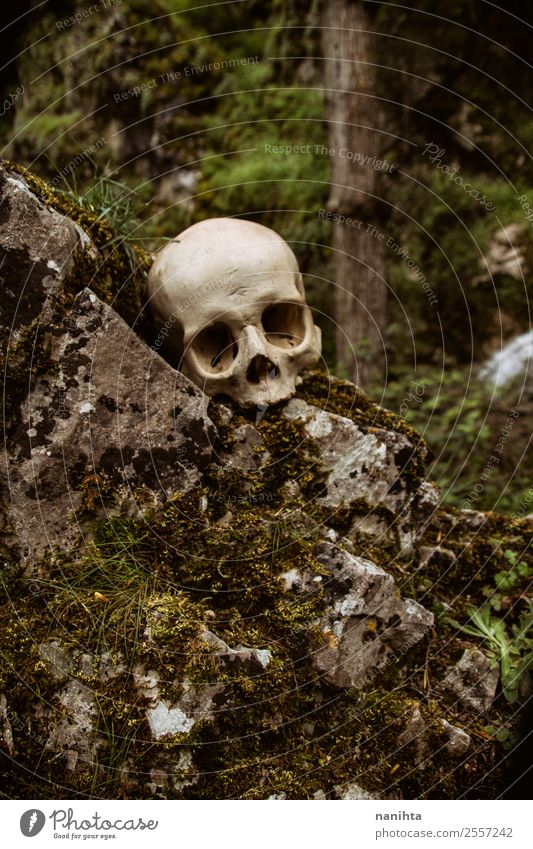 Old human skull in nature Hallowe'en Death's head Environment Nature Plant Spring Winter Climate Moss Forest Rock Dirty Dark Authentic Creepy Uniqueness Natural