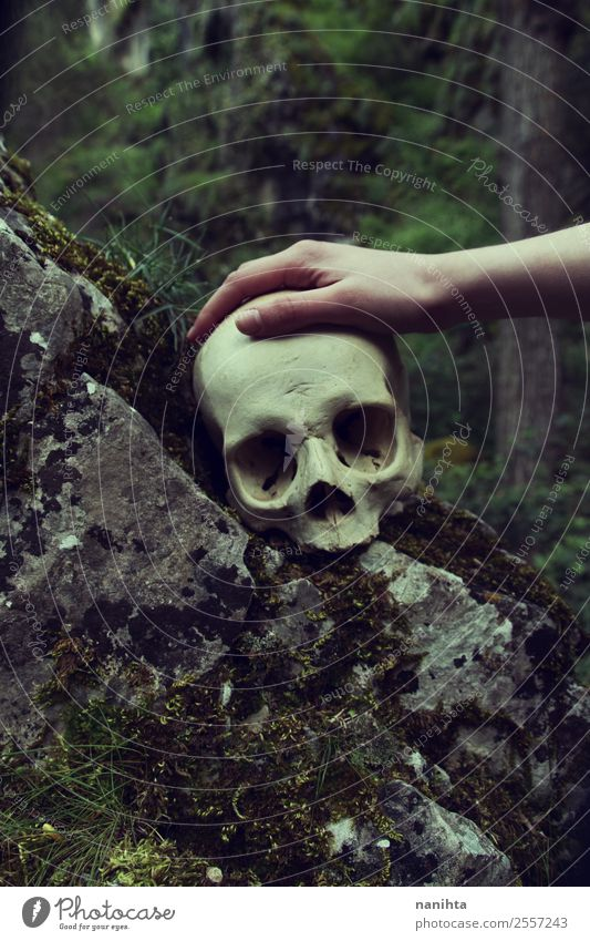 Hand touching a human skull Design Exotic Hallowe'en Death's head 1 Human being Environment Nature Winter Moss Forest Rock Touch Old Dirty Dark Creepy Historic