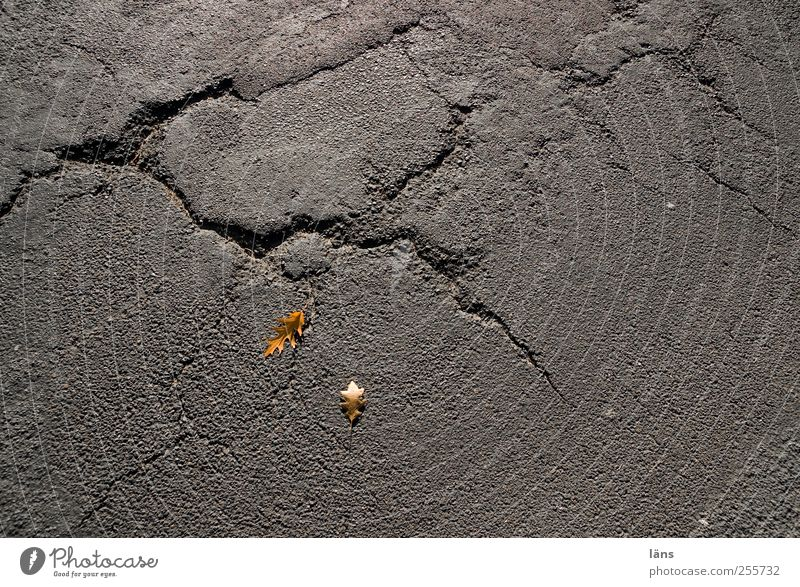 tracks Autumn Leaf Street Old Yellow Gray Transience Change Asphalt Crack & Rip & Tear Colour photo Exterior shot Structures and shapes Deserted Copy Space left