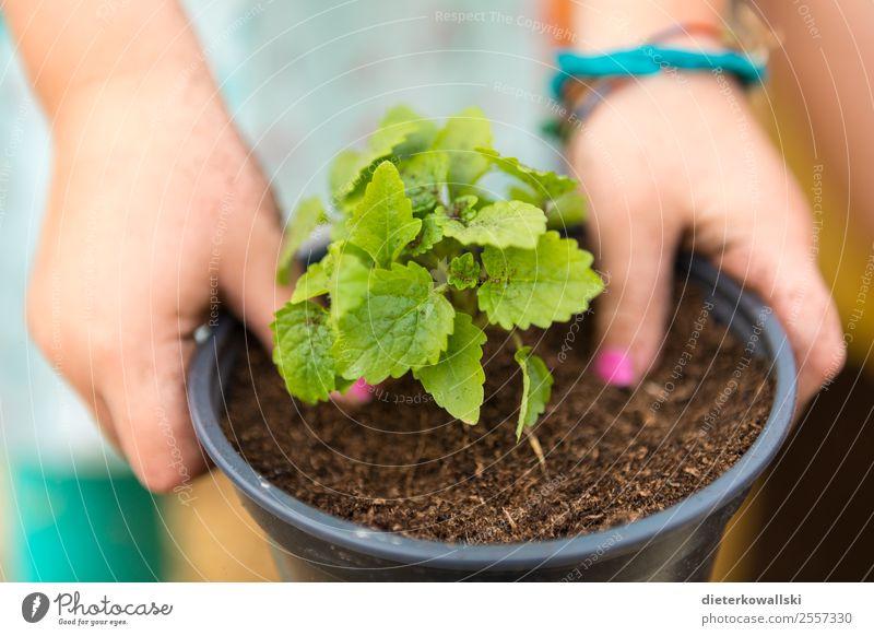 children's hands Parenting Education Kindergarten Child Study Environment Nature Plant Curiosity plants Experience Infancy Children`s hand Colour photo Close-up
