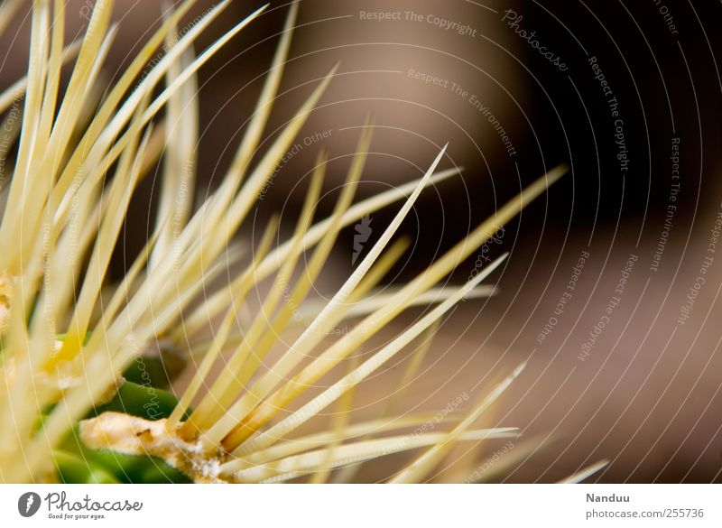 Nature Plant Point Exotic Thorny Cactus Thorn Delicate