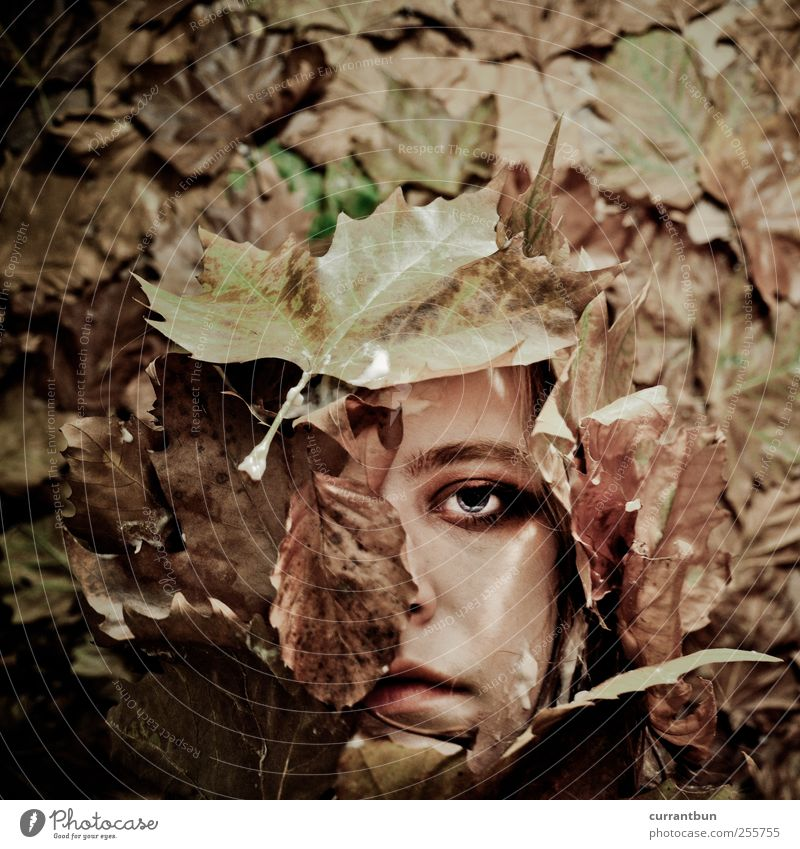 the echo will be silent Wood Esthetic Creativity Whimsical Autumn leaves Leaf Rachis Eyes Face Facial expression Leafless Colour photo Subdued colour