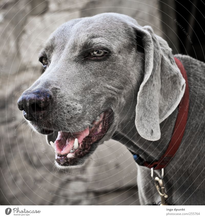 Dog Nature Old Beautiful Animal Environment Cold Gray Friendship Wait Esthetic Safety Observe Protection Watchfulness Pet