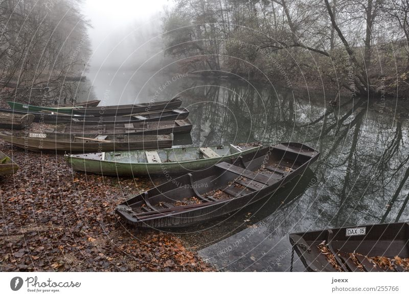 fishing port Water Autumn Fog Forest River bank Fishing boat Old Brown Green Black White Calm Idyll Jetty Old Rhine Rhein meadows Colour photo Subdued colour