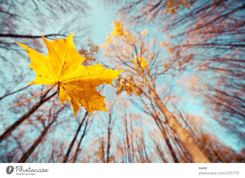 Sky Nature Blue Beautiful Plant Tree Landscape Leaf Forest Yellow Environment Autumn Air Illuminate Growth Tall