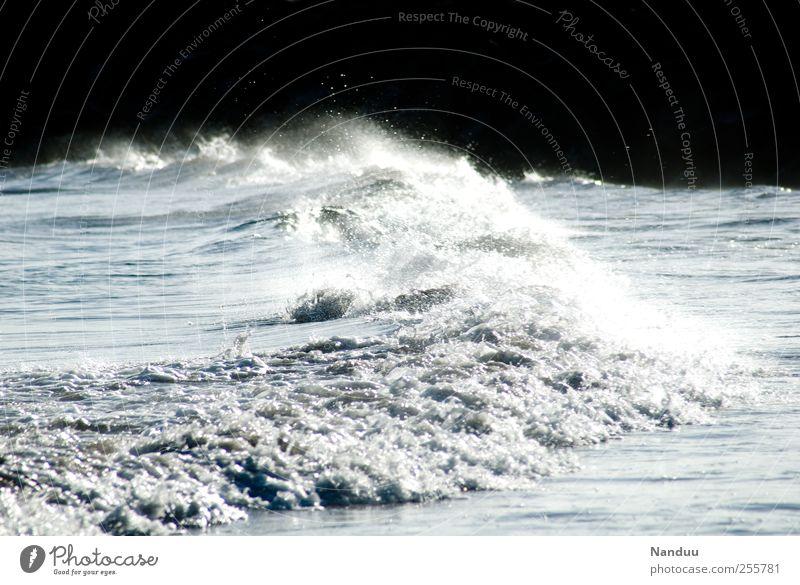 A sea of images Environment Esthetic Ocean Waves Surf Force Energy White crest Water Colour photo Subdued colour Exterior shot