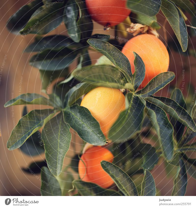 Nature Green Plant Summer Leaf Colour Nutrition Environment Warmth Orange Fruit Natural Esthetic Growth Round Italy