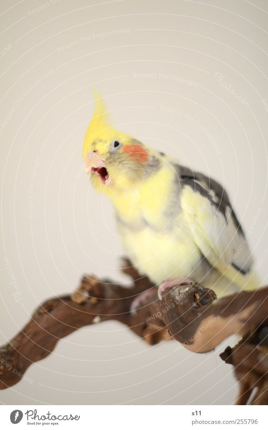 Animal Yellow To talk Emotions Gray Funny Brown Bird Flying Cool (slang) Wing Animal face Wing Fatigue Metal coil Breathe