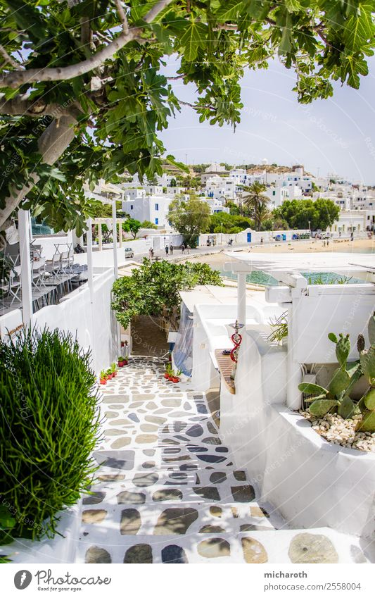mykonos Lifestyle Leisure and hobbies Vacation & Travel Tourism Trip Sightseeing Cruise Summer Summer vacation Beach Beautiful weather Tree Cactus Foliage plant