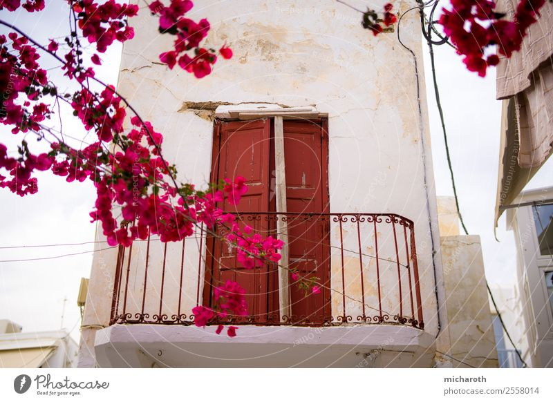 Door behind flowers Vacation & Travel Tourism Trip Adventure Sightseeing Summer Summer vacation Living or residing Flat (apartment) Plant Tree Flower Blossom