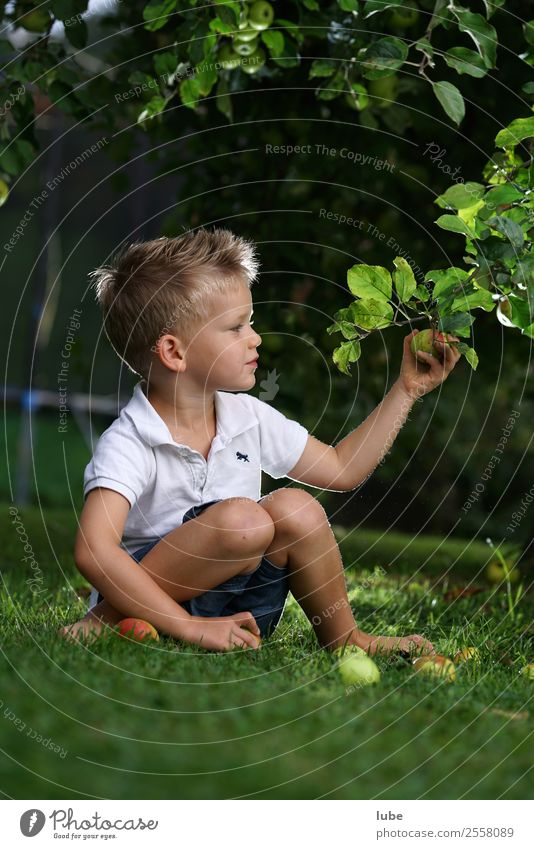 Child Nature Healthy Food Eating Autumn Environment Boy (child) Fruit Nutrition Fresh Infancy Harvest Apple Vegetarian diet Gardening