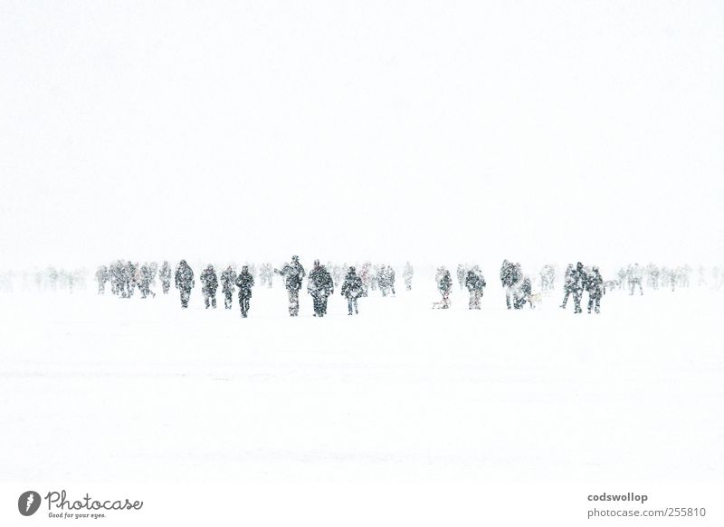 White Winter Black Cold Snow Gray Lake Weather Ice Climate Hamburg Frost To go for a walk Frozen Storm Crowd of people