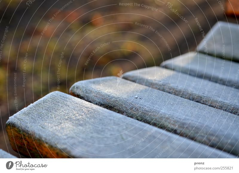tomorrow, rough ripe Winter Wood Brown Gray White Bench Hoar frost Cold Colour photo Exterior shot Morning Sunlight Shallow depth of field Wooden bench Frozen