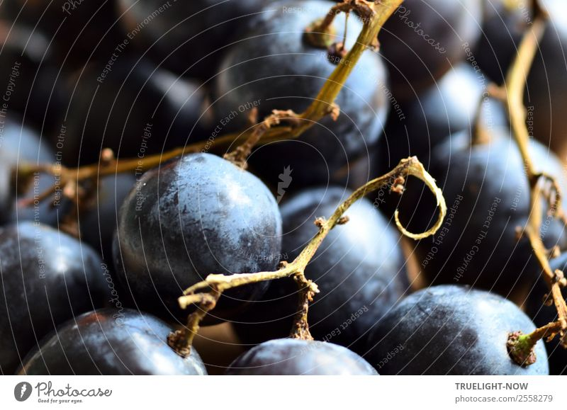 Blue grapes Fruit Nutrition Organic produce Vegetarian diet Diet Healthy Healthy Eating Fitness Life Harmonious Well-being Contentment Senses Brown Black Joy