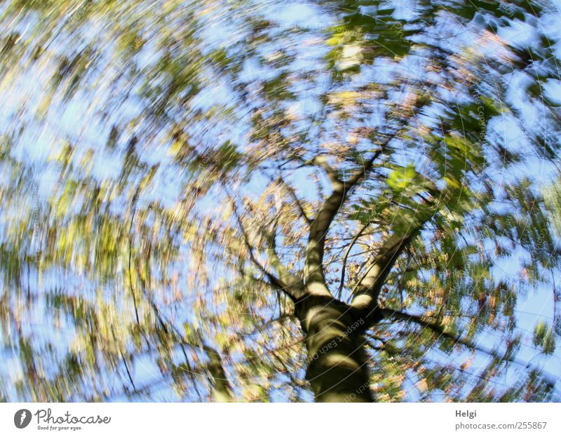 rotating worm Environment Nature Plant Cloudless sky Autumn Beautiful weather Tree Leaf Movement Rotate Growth Exceptional Fantastic Uniqueness Natural Blue