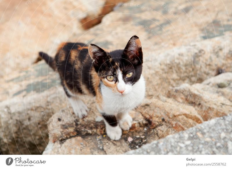 Stray cat black and brown Beautiful Face Nature Animal Street Fur coat Pet Cat Sadness Dirty Thin Small Cute Wild Brown Gray White Loneliness stray Kitten