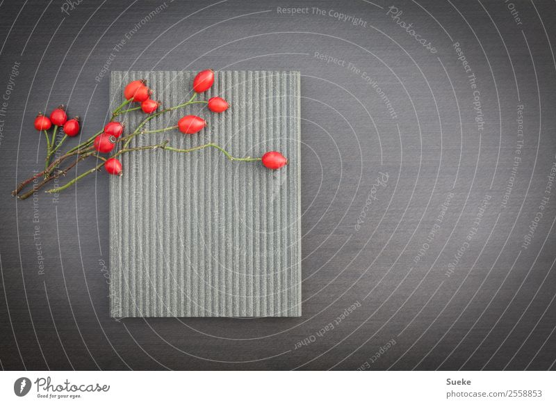 quiet berry arrangement with rose hips Rose hip Stone slab Relaxation Comforting Calm Feng Shui Copy Space Red Gray monochrome background Colour photo Deserted