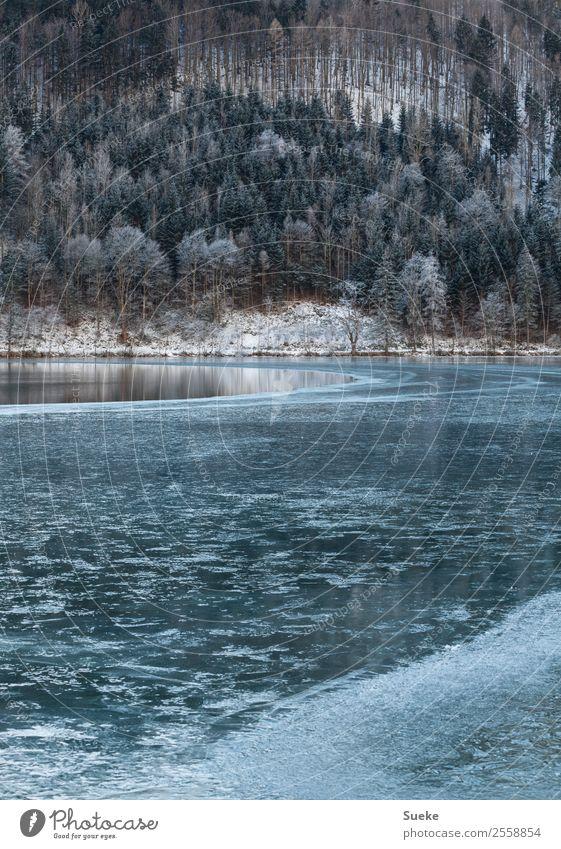 Half-frozen lake in idyllic winter landscape Winter Nature Tree Coniferous trees Mountain lake Lake Lakeside Deserted Idyll Frozen Frost Ice Landscape Snow
