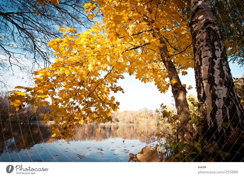 favourite place Environment Nature Landscape Elements Water Autumn Climate Beautiful weather Tree Leaf Lakeside Exceptional Natural Yellow Idyll Autumn leaves