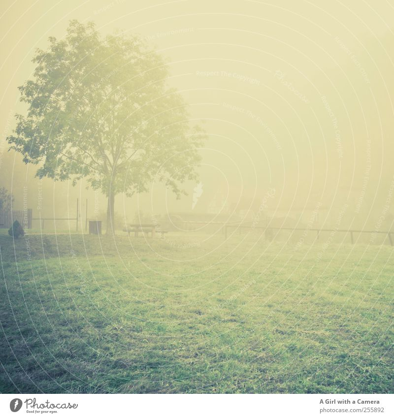 Nature Tree Plant Calm Loneliness Autumn Meadow Environment Landscape Grass Sadness Moody Elegant Fog Natural Gloomy