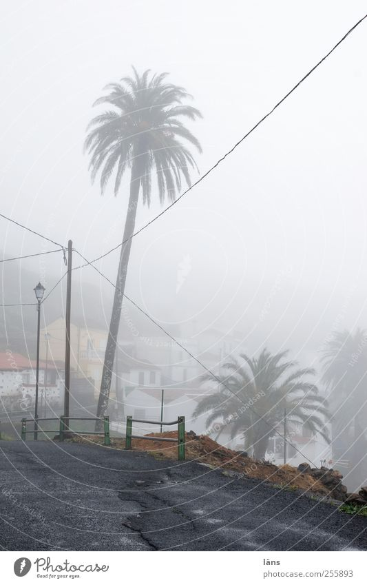 * holiday dream* Landscape Fog Village House (Residential Structure) Gray Lanes & trails Asphalt Street Palm tree Electricity pylon High voltage power line