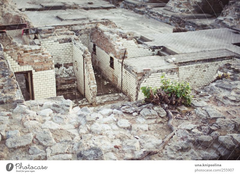 Nature Old Plant House (Residential Structure) Wall (building) Berlin Building Wall (barrier) Time Stone Living or residing Dirty Transience Broken Planning