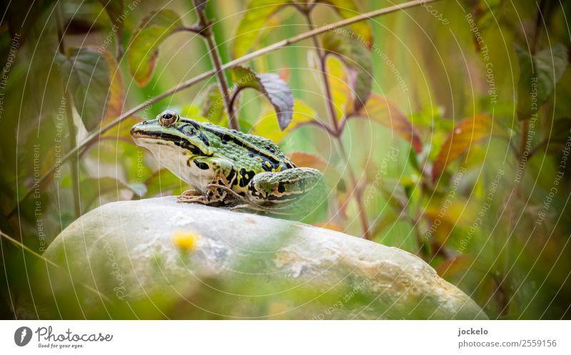 Summer Green Sun Animal Stone Brown Trip Wild animal Adventure Pond Camping Frog Feeding Grass frog