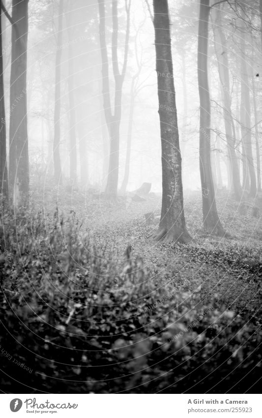 what the hell awaits us? Environment Nature Landscape Plant Autumn Winter Fog Tree Forest Threat Dark Thin Large Infinity Beautiful Natural Wild Lanes & trails