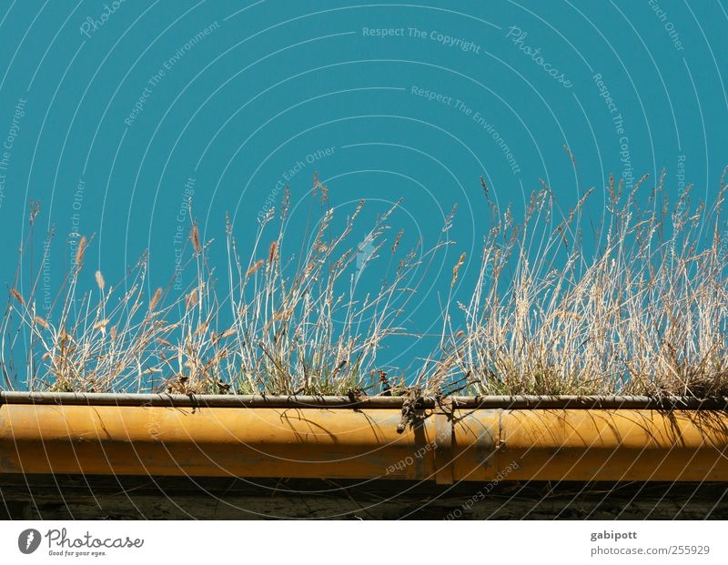 Sky Nature Old Blue Yellow Grass Building Natural Wild Exceptional Change Roof Transience Idyll Dry Beautiful weather