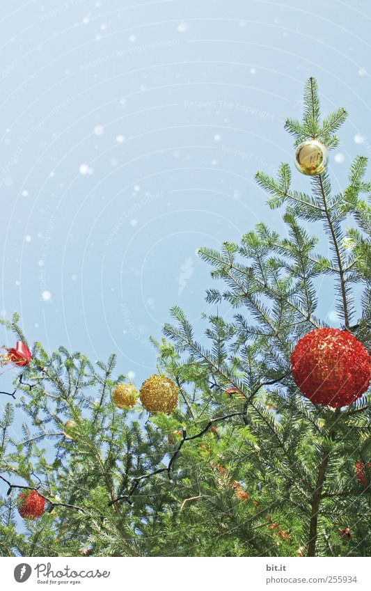 Sky Christmas & Advent Blue Tree Red Snow Environment Snowfall Feasts & Celebrations Glass Gold Glittering Decoration Round Kitsch Christmas tree