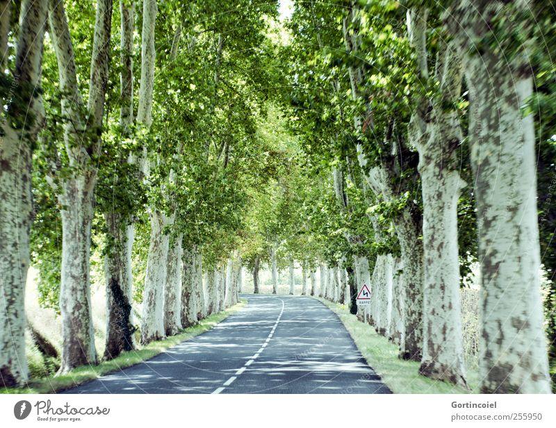Tree Summer Street Speed Driving Treetop Avenue In transit Sunspot