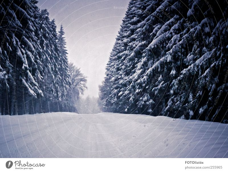 Cold times Trip Adventure Winter Snow Winter vacation Winter sports Weather Snowfall Tree Fir tree Forest Deserted Gloomy Haze Fog Street Colour photo