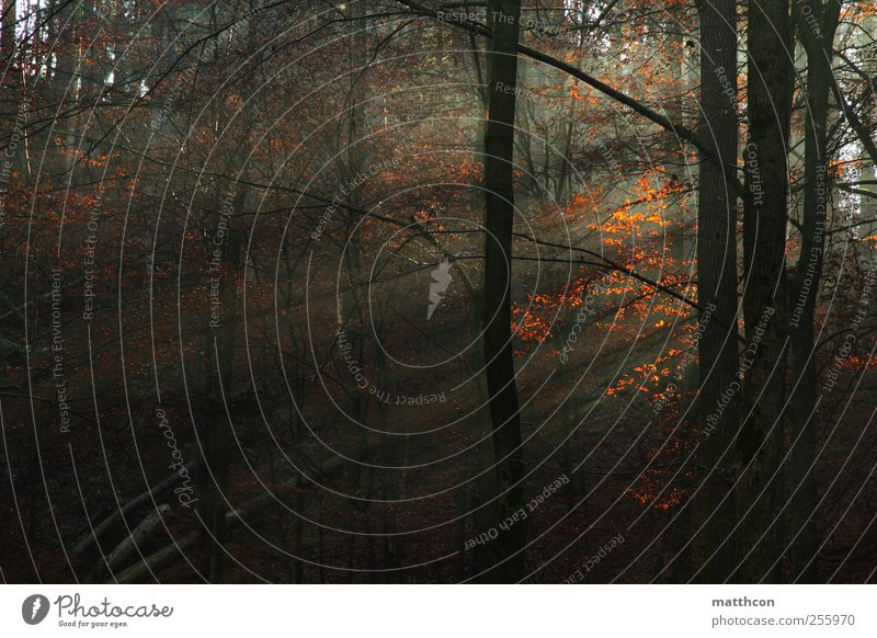 Nature Tree Plant Calm Forest Autumn Environment Landscape Moody Fog Autumnal
