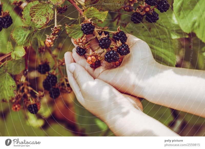Children's hands holding blackberries Healthy Healthy Eating Leisure and hobbies Playing Vacation & Travel Girl Boy (child) Infancy Youth (Young adults) Life