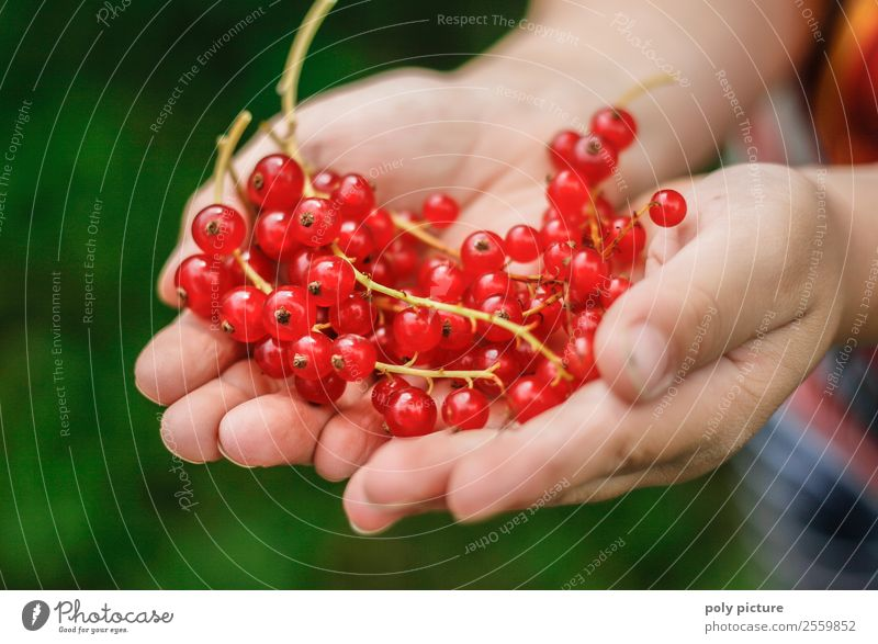 Currants in children's hands Healthy Eating Leisure and hobbies Playing Child Girl Boy (child) Infancy Youth (Young adults) Life Hand 1 - 3 years Toddler