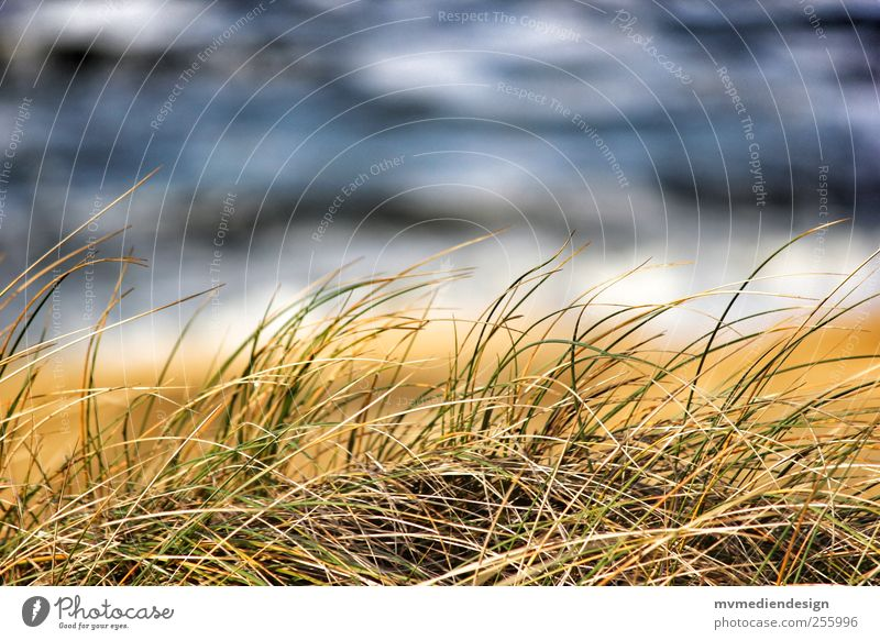 Sylt Dungrass Nature Landscape Beautiful weather Grass Coast Beach North Sea Joy Dream Island Dune Ocean Waves Water Colour photo Copy Space top Day Blur