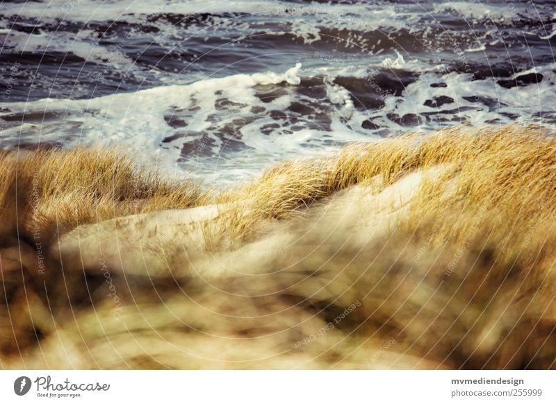 Place in the dunes Water Coast Beach North Sea Contentment Joie de vivre (Vitality) Spring fever Optimism Marram grass Places Waves Sand