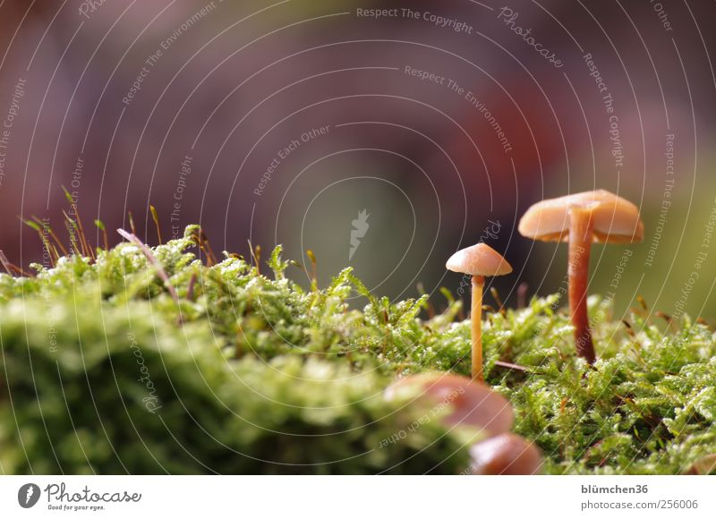 Once I grow up, I'm going to... Food Vegetable Nutrition Nature Plant Autumn Moss Mushroom Mushroom cap Woodground Growth Esthetic Beautiful Small Delicious