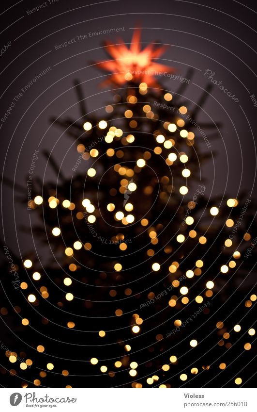 Christmas & Advent Feasts & Celebrations Star (Symbol) Illuminate Christmas tree Glitter Ball Safety (feeling of) Anticipation Pensive Sea of light