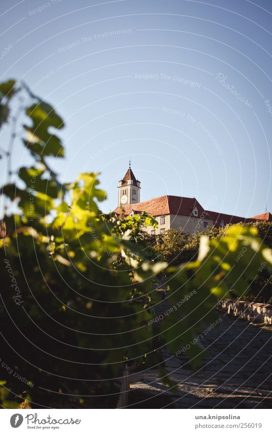 It stood at his castle parapet... Environment Nature Beautiful weather Plant Leaf Agricultural crop Vine Vineyard Austria Federal State of Styria