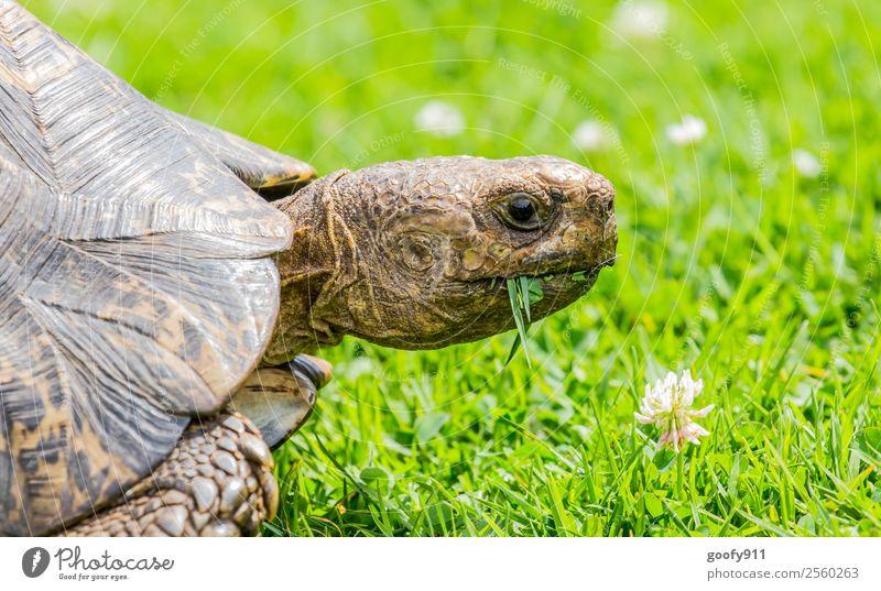 enjoy your meal Trip Adventure Nature Earth Plant Grass Animal Wild animal Animal face Animal tracks Zoo Turtle Tortoise-shell 1 To feed To enjoy Crawl