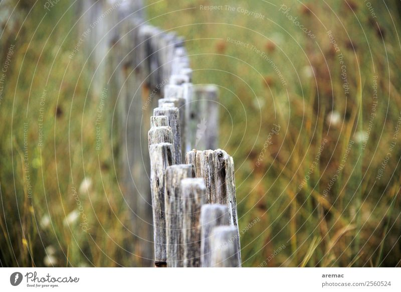 Wooden fence in the dunes Nature Landscape Plant Summer Coast Dune France Brittany Europe Fence Esthetic Gray Green Calm Moody Grief Colour photo Subdued colour