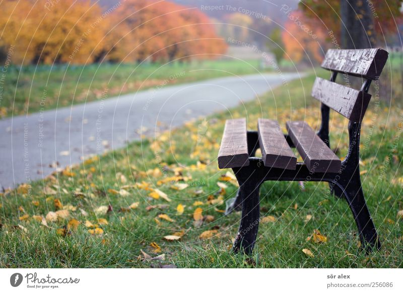 Nature Tree Plant Leaf Relaxation Environment Autumn Wood Grass Lanes & trails Sadness Break To go for a walk Bench Asphalt Footpath